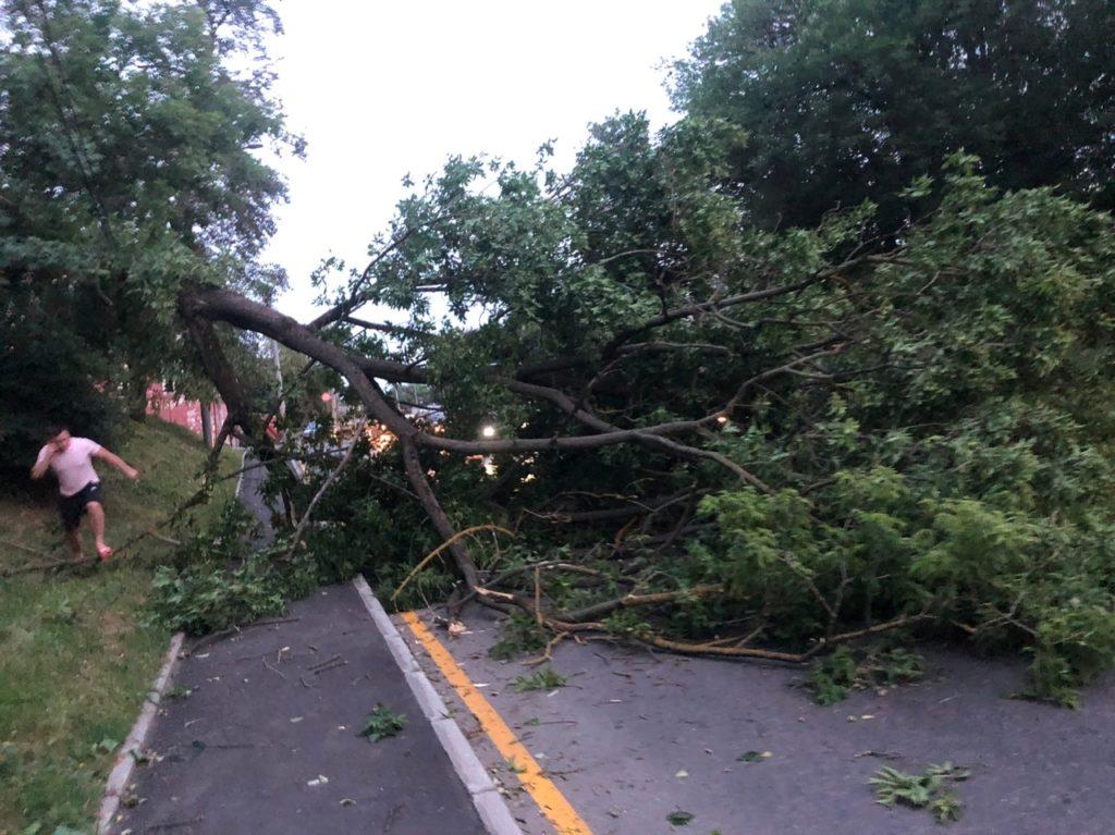 Ураган во Владимирской области повалил деревья